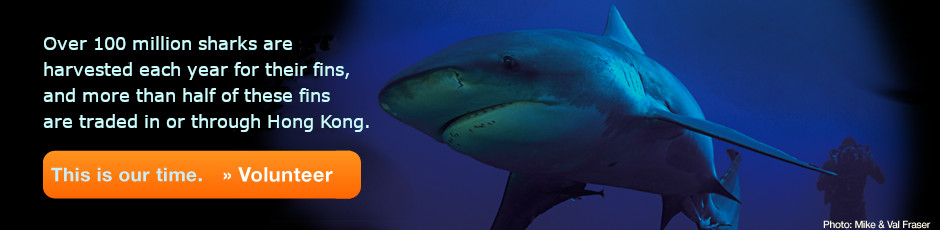 Hong Kong Shark Foundation